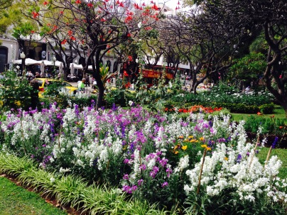 The small botanical garden in the centre of Funchal