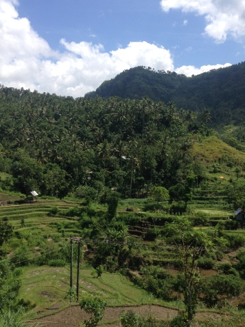 Rice terraces on the way
